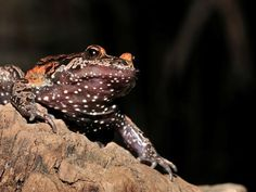Frog thought to be extinct found in Israel pond