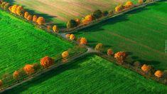 Pola, Drogi, Drzewa, Jesień