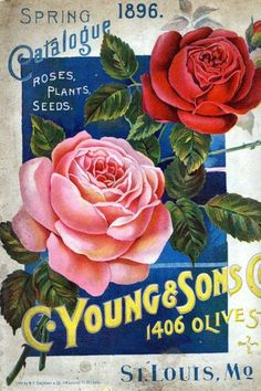New Plants Illustration Vintage Seed Catalogs Ideas