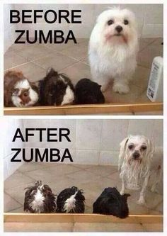 Haha! This is so me! Come work up a good sweat TODAY at 12pm! Check out www.zumbawithmegan.com for more class times!