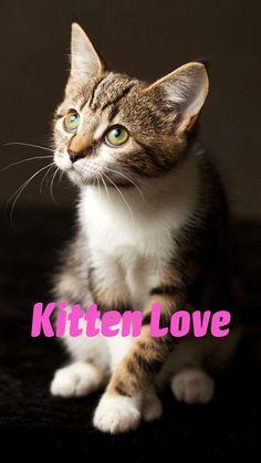 Pretty Cats, Beautiful Cats, Silly Cats, Cute Cats, Kitten Love, Kitten Gif, Kittens Cutest, Cats And Kittens, Fluffy Cat