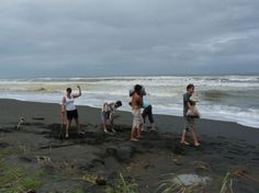 Volunteer Abroad Costa Rica Sea Turtles programs - Our projects are open to individuals as well as groups.  We know that volunteers play a vital role in the conservation efforts: without outside assistance, these projects would be lost. Join them and make a difference! https://www.abroaderview.org