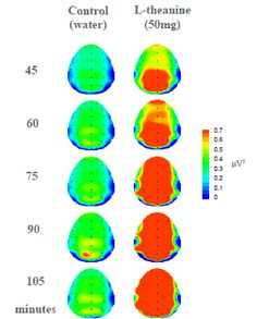 Brain Waves Indicate Tea Creates 'Relaxed Alertness' 26 Apr 2012 By World Tea News Brain scans show that compared to water, the L-the. Brain Waves, Tea, Create, Blog, Inspiration, Green, Biblical Inspiration, Blogging, Teas