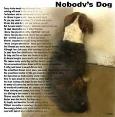 Microchip your pets! Personally check all the shelters in your area. It could be the difference between life and death for your pet. Shelter Dogs, Animal Shelter, Animal Rescue, Shelters, I Love Dogs, Puppy Love, Adoption, Stop Animal Cruelty, Animal Welfare