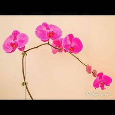 #instagood#photography #pink#warrnambool #photooftheday#instamood#canon#picoftheday#igers#6d#follow#followme#hashtag#photo#tweegram#beautiful#instadaily#spring#instagramhub#igdaily#bestoftheday#australia#macro#picture#love#tbt#flowers #flower#shoutout by brad_royce