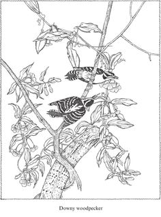 Welcome to Dover Publications - CH Audubon Birds