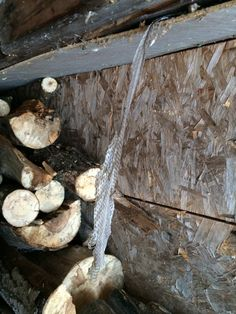 hey...even in winter, the snakes creep me out.  check out what i found coming out of the woodshed roof!!!