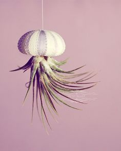 Stripey Jellyfish Air Plant and Sea Urchin // by PetitBeast, $8.00