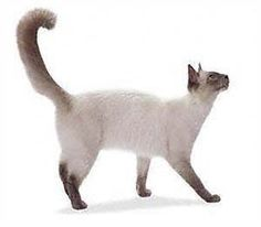 http//wwwwarrenphotographiccouk/  tabby cat cat pose