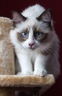Unusual kitten. by awphotoart on DeviantArt
