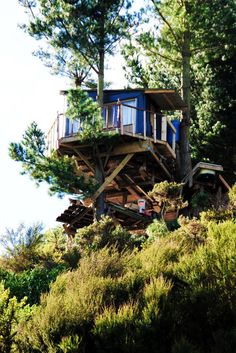 The Best Hut (Tree Bach), Tree House, New Zealand