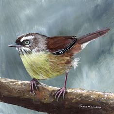 """""""White Browed Scrubwren"""" by Janet Graham. Paintings for Sale. Bluethumb - Online Art Gallery"""