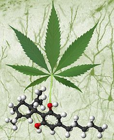 Cannabinoids in cancer treatment: lung and colon cancer