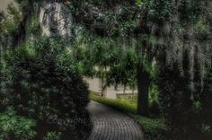 Found a secret path....intrigued?      #followyournola#nola#citypark#onlylouisiana#igersnola#igersnworleans#wearenola#beatouristnola#nature#spanishmoss#moss#getoutdoors#trees#shadowsandlight#path#naturelovers#natureshots#beautiful#instagood#picoftheday#bigeasy#outdoors#itsyournola#neworleans#frenchquarter#cityparkneworleans#igersnature#art#nolaart#tree by dragoneyz21