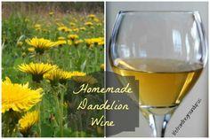 Dandelion Wine - life from the ground up Wine Drinks, Alcoholic Drinks, Cocktails, Dandelion Wine, Homemade Tea, Order Wine Online, Wine Gift Boxes, Homestead Gardens, Wine Sale
