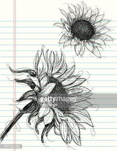 Sunflower sketches on notebook paper. The artwork and paper are on separate labeled layers.