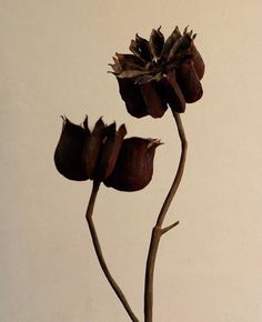 A dedication to simple beauty / Mesmerized by the work of artist Karl Blossfeldt, who dedicated 35 years to exclusively botanical photography