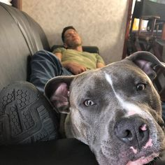 Heartwarming Photos Of 'The Walking Dead' Star With His 3 Rescue Pit Bulls Will Melt Your Heart Josh Stewart, Marvel Series, Best Dog Breeds, Hollywood Actor, Animals Of The World, Daredevil, Punisher, Bored Panda, My Guy