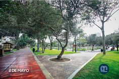 Parque Los Olivos (or Parque Olivar) in San Isidro, Lima. Great place for bike riding.
