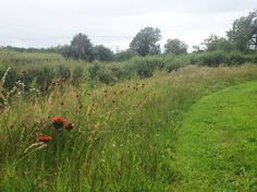 Wildflower meadow with mown path. http://designswithnature.co.uk