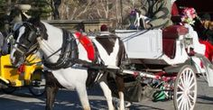 """NYC Mayor: Horse-Drawn Carriages in Central Park """"Inhumane,"""" Abortions Okay New York, NY 