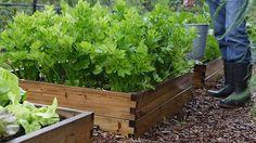 Viljelylaatikko. Suunnittelu ja kuva: www.paakkanen.fi / Kekkilä Plants, Vegetable Garden, Garden