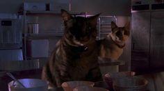 Vídeo: Jurassic Gatos http://www.ativando.com.br/videos/video-jurassic-gatos/