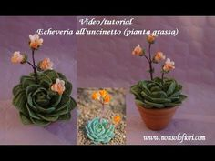 In this video you'll learn to crochet an easy, beginner friendly succulent plant. This tutorial only uses basic stitches, and is adjustable to make any size . Crochet Flower Tutorial, Crochet Flower Patterns, Crochet Flowers, Felt Succulents, Yarn Flowers, Crochet Cactus, African Flowers, Echeveria, Crochet Videos