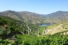 A guide to Port on the Douro - via Scenic May 2015 | Whether you're familiar with port or not, it's certainly a drink with a fascinating history and is arguably the greatest of all fortified wine. When visiting the very first vineyard area to be legally demarcated during river cruises on the Douro in Northern Portugal, you will want to make sure that you taste a variety of the different styles of port that can be found. #douro #porto #portugal #travel #tips #wine Photo…