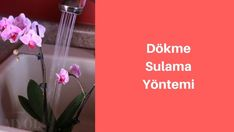 dökme sulama ile orkide sulama Gardening, Lawn And Garden, Horticulture