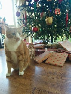 'Twas the night before Christmas (with cats)