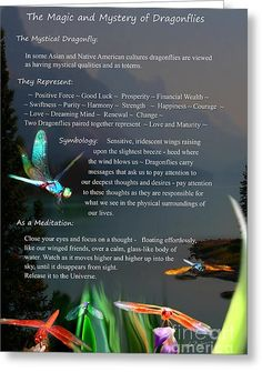 Dragonfly Digital Art - Magic And Mystery Of Dragonflies by Lisa Redfern Dragonfly Meaning Spiritual, Dragonfly Symbolism, Dragonfly Quotes, Dragonfly Tattoo Design, Dragonfly Art, Dragonfly Images, Tattoo Designs, Spiritual Meaning, Dragonfly Necklace