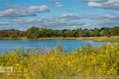 A Beautiful Day At The Salt Marsh by paulsikorski #landscape #travel