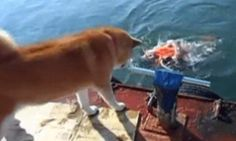 Funny Gif Of The Day: Man's Best Friend...Put me out in the cold, human?  Who's cold now!