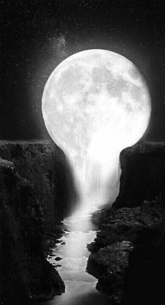 black#and#white#in#the#moon#light#in#the#night