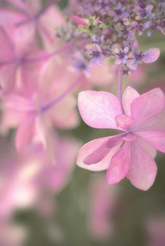 pretty in pink Amazing Flowers, Pretty In Pink, Pink Flowers, Beautiful Flowers, Nice Flower, Planting Flowers, Delicate, Happy Thursday, Thursday Quotes