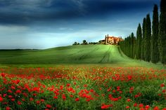 """""""Spring in Tuscany, Italy Pictures To Paint, Great Pictures, Beautiful Pictures, Arno, Toscana Italy, Tuscany, Poppy Photography, Restaurants, Weather And Climate"""