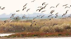 Photographers' paradise Kashmir valley to say 'goodbye' to thousands of migratory birds