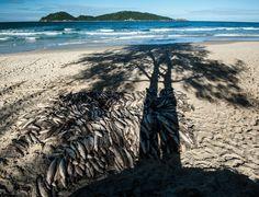Praia do Campeche Pesca da Tainha Foto: Mara Rejane Freire