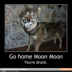 Moon Moon Wolf Funny | MOON MOON HAS FUCKING RABIES GODDAMMIT