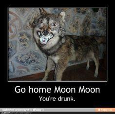 Moon Moon Wolf Funny   MOON MOON HAS FUCKING RABIES GODDAMMIT