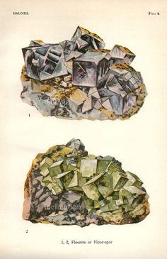 Vintage 1916 Minerals Print Antique Gems Precious Stones print gemstones print, bookplate art print, minerals wall print wall art. $14.50, via Etsy.