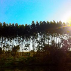 No último final de semana nós, da Plantei, acampamos, exploramos, estudamos, conhecemos e nos apaixonamos ainda mais pelo incrível mundo verde! 😍  Gratidão. 💚 #lojaplantei #acampamento #plantei #green #mundoverde #nature
