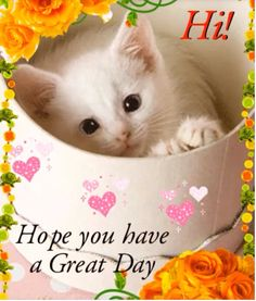 Hi Hope you have a great day hello angel friend kitty comment good morning good day greeting graphic beautiful day Great Day Quotes, Cute Good Morning Quotes, Morning Inspirational Quotes, Good Morning Friends, Good Morning Messages, Good Night Quotes, Good Morning Good Night, Good Morning Wishes, Good Morning Images