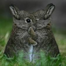 Image result for best bunnies for cuddling