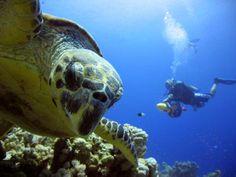 Diving - Adaaran Select Meedhupparu --->>> www.voyagewave.com