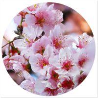 Adesivos Cherry Blossom