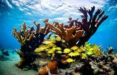 Corl reefs, Bahía de Cochinos, Cuba - Ian Shive