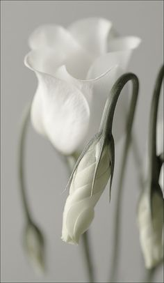 ~♡Just white...a symbol of pure love... something which, alas, is getting harder to come by these days, no?♡~