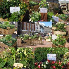 A Garden on Northampton Market - 4 June 2014